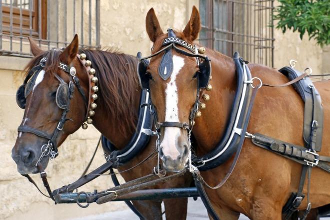 horse-cart-573795_1280