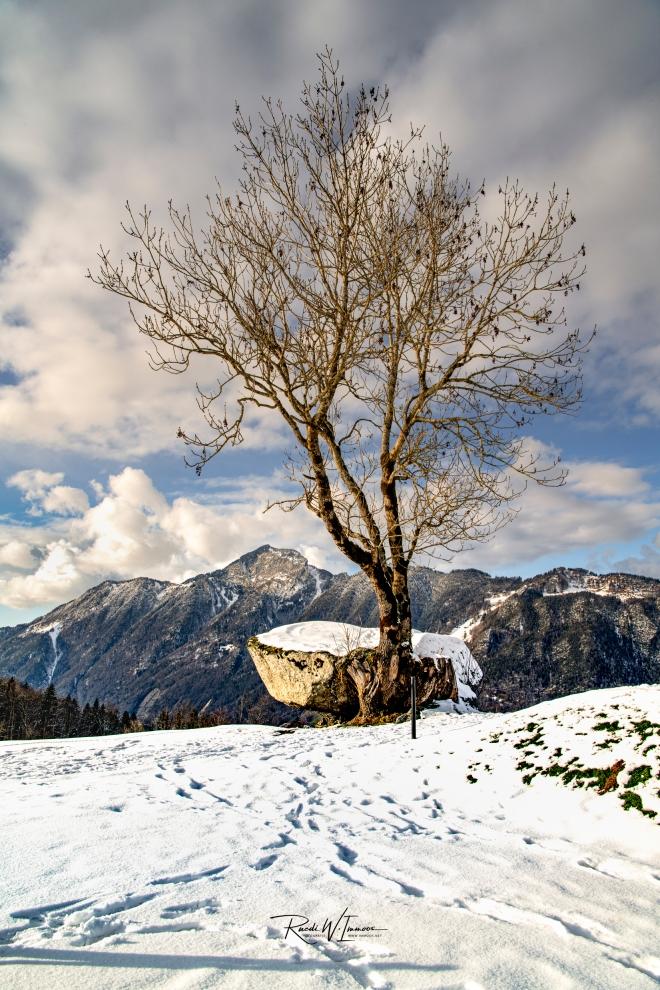 Druidenstein Hochformat Rigihochfluh Wintertag_DSC9491-Signet-web