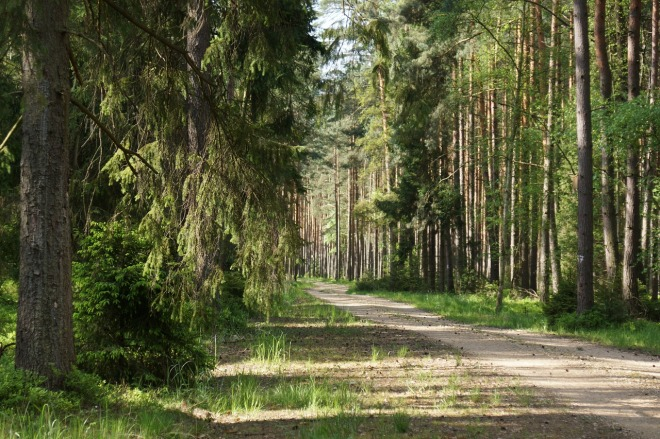 forest-1442247_1280