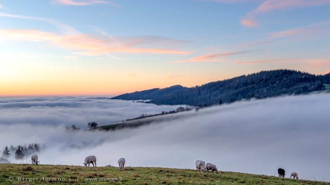 Ratenpass-Nebelmeer-Schafe-weiden-Abendrot_DSC1217-Signet-web