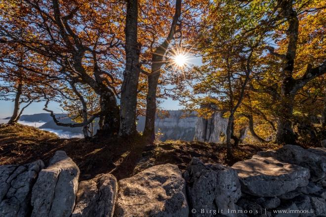 Creux-du-Van-Steinmauer-Krüppelbäume-Wurzeln-sonnenstern-Herbst_DSC9165-Signet-web