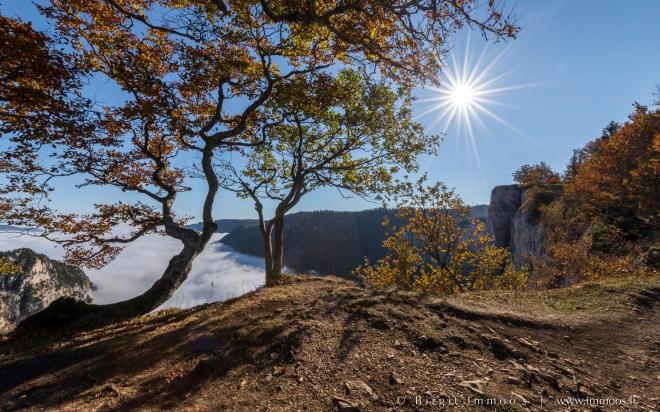 Creux-du-van-Krüppelbaum-unten-Sonnenstern-Herbst_DSC9160-Signet-web