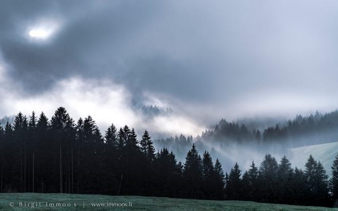 Sattel-Altmatt-Nebelschwaden-Wald-Sonnendurchbruch_DSC1143-Signet-web