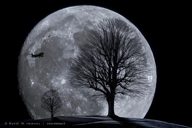 einsame-bäume-mond-flugi-comp-signet-web