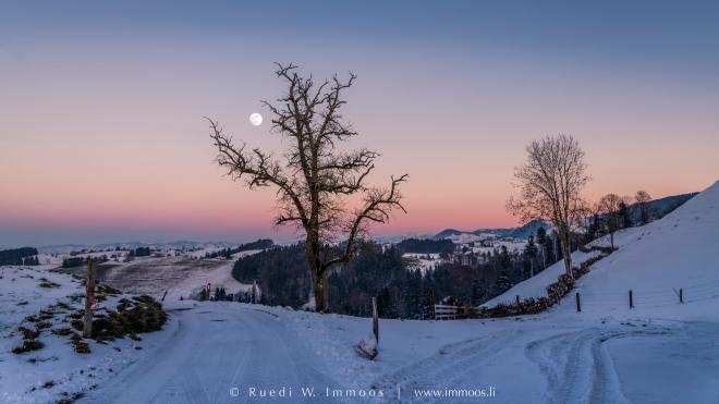 hirzel-landschaft-richtung-wädenswil-baum-mond-rosa_dsc7913-abc-signet-web