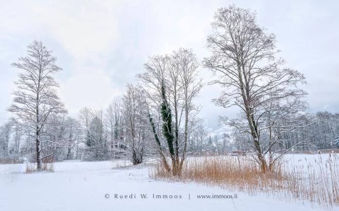 lauerz-segel-winterland-schaft-drei-bäume-hell_dsc7717-aa-signet-web