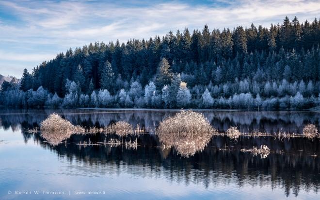 schwarzwald-schluchsee-waldrand-raureif-drei-goldweisse-gebüsche-im-wasser-spiegelung_dsc7474-signet-web
