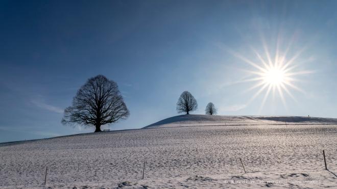 Dürrenroth-drei-Linden-von-rechts-Sonnenstern-Winter_DSC7945-a-Signet-web