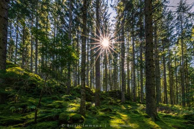 Schwarzwald-Mathieselewald-Sonnenstern_DSC8244-Signet-web