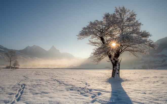 Segel-Lauerz-Sonnenaufgang-Blendenstern-im-Baum-Mythen-Winter_DSC2782-a-Signet-web