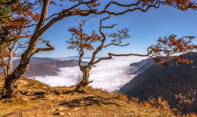 Creux-du-Van-Krüppelbäume-warm-Herbstsonne-Nebelmeer_DSC5532-Signet-web