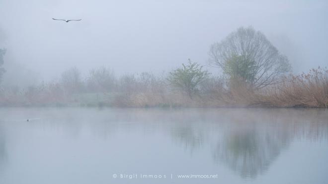 Nebelstimmung-mit-Möve-am-Flachsee-3-Signet-web