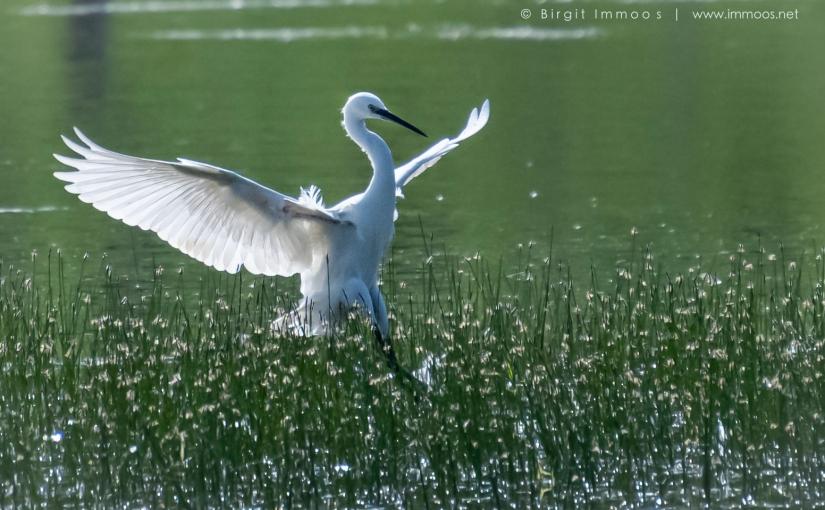 Landschafts- und Tierfotografie, eine gute Kombination fürFotografen