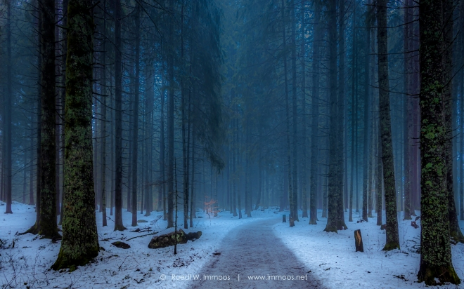 Eisweiher-Waldweg_DSC2517-1-Signet-web