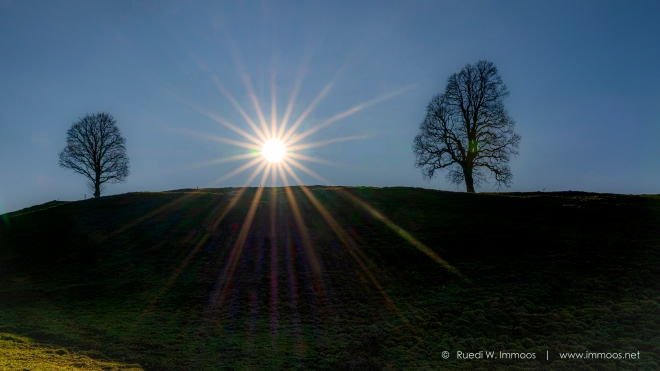 Gründel-Hügel-zwei-Bäume-Sonnenstern-Herbst_DSC0420-Signet-web