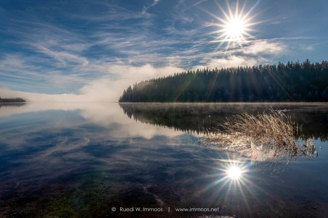 Schluchsee-wintermorgen-Raureif-Sonnenstern-Nebelschwaden_DSC7435-signet-web