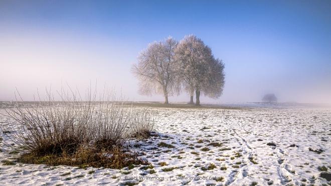 Sihlsee-Nebellandschaft-Baumgruppe-sonniger-Nebelst-webreif-Z50_0003-a-Signet