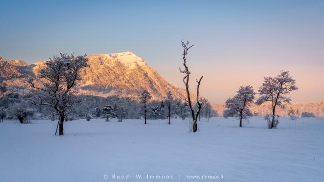 Segel-Lauerz-Rigi-erstes-Licht-mit-Krüppelbaum-Winter_DSC8183-a-Signet-web